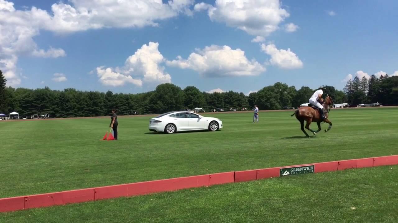 Tesla Model S X Vs Polo Horses