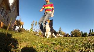 Best Border Collie, Sheltie, Chihuahua - 40 Cool Tricks New