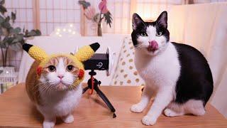 花花与三猫-戴耳机听猫吃零食-不仅听饿了-还感觉有猫了