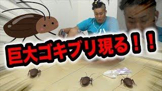 【大嫌い】超巨大ゴキブリが襲いかかってきた…その後!? thumbnail