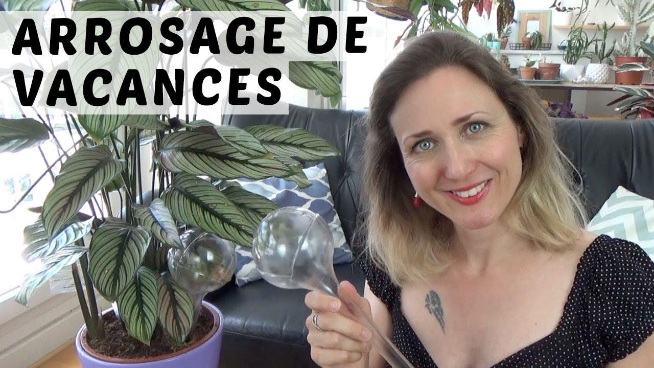 Comment Arroser Mes Plantes Pendant Les Vacances ? arrosage de vacances : une solution facile pour les plantes d'intÉrieur  avec l'aqua care