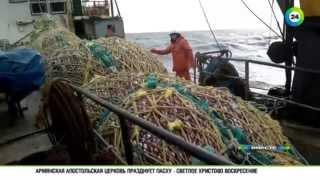 Траулер «Дальний Восток» сгубила жадность(Рыболовное судно затонуло в ночь на 2 апреля, на борту находились 132 члена экипажа. По последним данным, 56..., 2015-04-05T19:11:13.000Z)