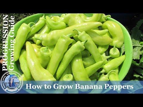 How to Grow Sweet Banana Peppers