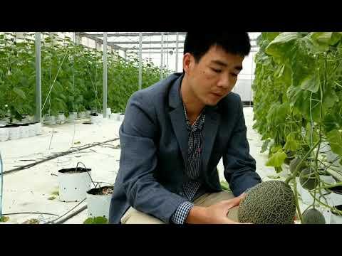 Chuyện Lạ Việt Nam Cho Cây Dưa Nghe Nhạc! (Playing Music To Your Plants)