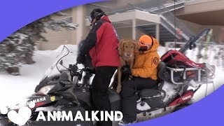 Real-life Paw Patrol Dogs Save Lives | Animalkind