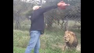 Feeding an angry, injured lion in Africa  ...Songwriter, Gary J Hannan