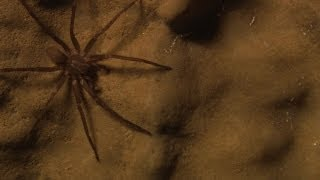 Shadows and Spiders - A Secret Cave in California: Science on the SPOT