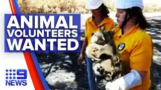 RSPCA calls for help to save bushfire affected animals | Nine News Australia