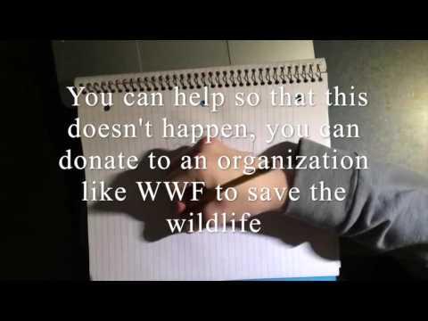 Wildlife Extinction