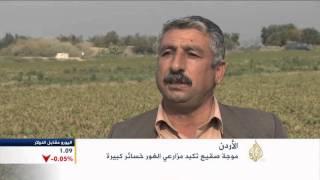 الصقيع يلحق خسائر بمزارعي غور الأردن