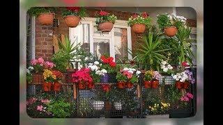 видео Видео цветы на балконе
