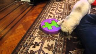 Kyjen Dog Game Jigsaw Glider