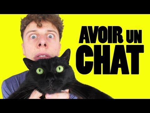 Thumbnail: NORMAN - AVOIR UN CHAT
