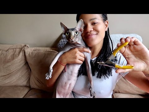 HOW WE CUT RUMI'S CLAWS
