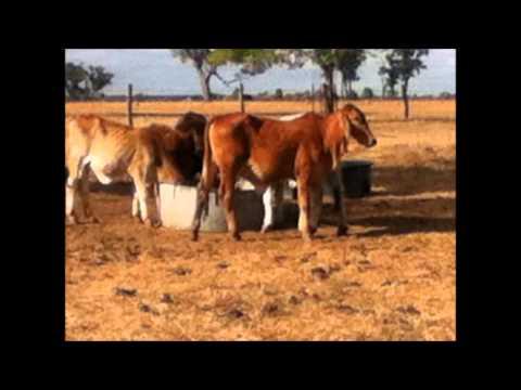 Queensland's Drought