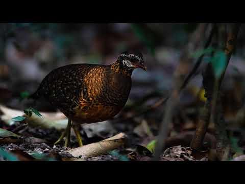 Cambodia birding 01