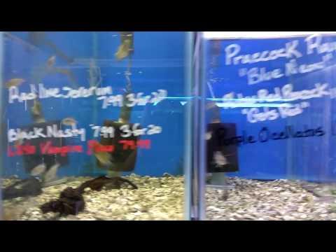 Omar From ReyesAquatics Taking You Into Fishy Bizness Local Michigan Fish Store ACA Convention