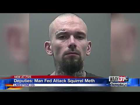 MORNING NEWS - Man Accused of Feeding Attack Squirrel Meth