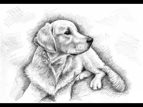 Tiere Zeichnen mit Grafit (Bleistift-Zeichnungen)