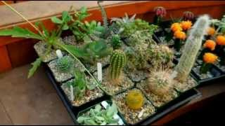 How To Care for Cacti & Succulents