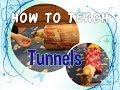 How to Teach a Guinea Pig to Go Through a Tunnel (Open and Closed Tunnels)