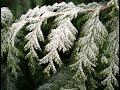 В городском саду падал снег Михаил Круг автор Н Бурлакова mp3