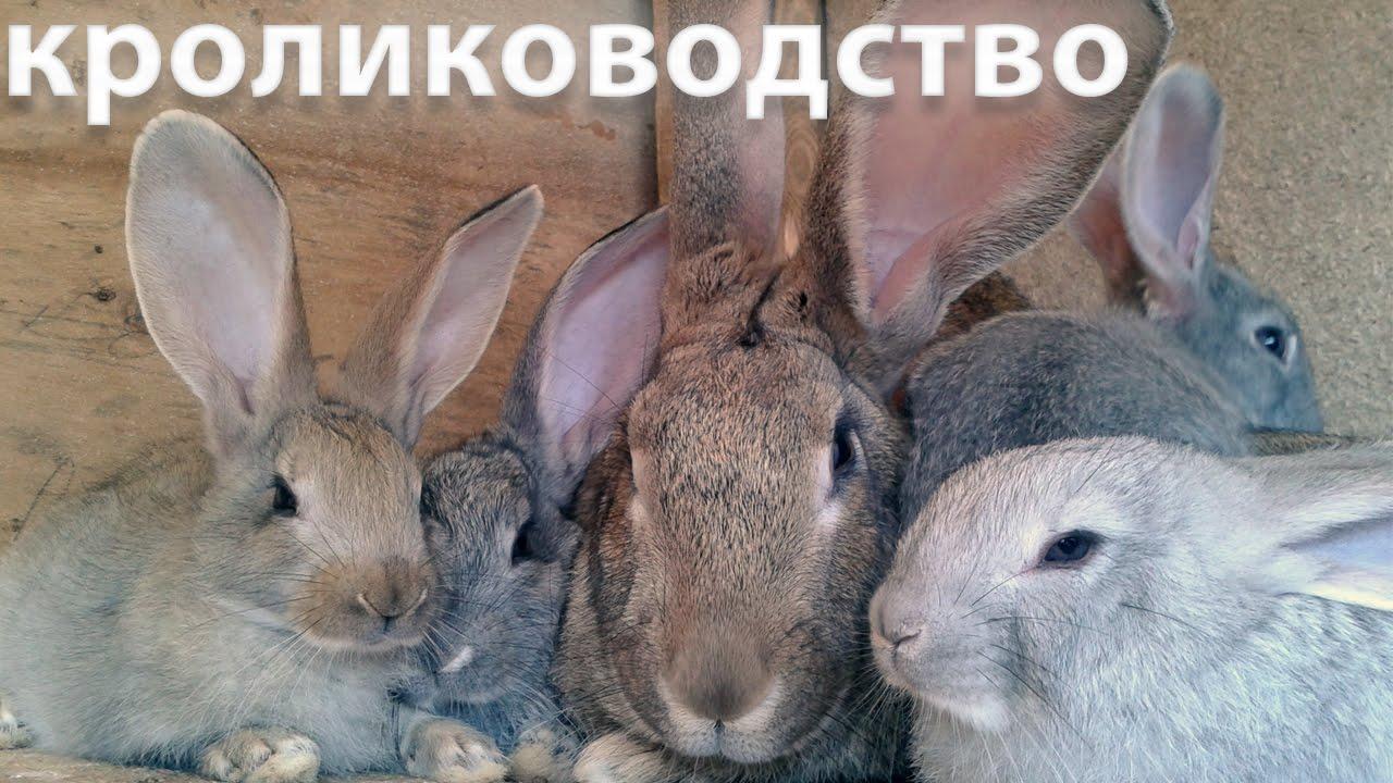 Крольчата купить кролика великана - YouTube