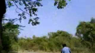 Jungle Ride--Gobi Gunderi Pallam---Sathyamangalam