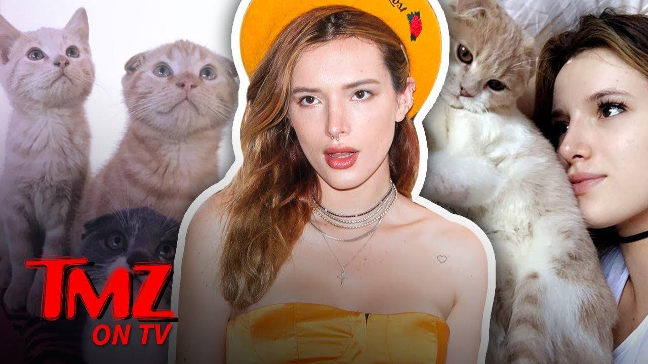 Crazy cat lady internet dating video cat