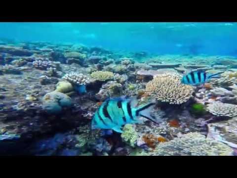 Agincourt Reef Snorkeling, Port Douglas QLD, Great Barrier Reef, Australia