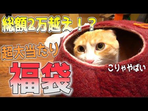 【神袋】1万円の猫用福袋を開封したら超当たり袋だった!!