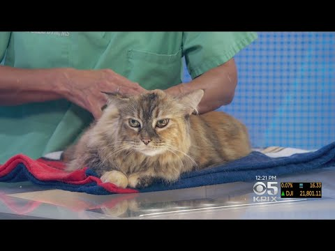 pet-expert:-what-to-do-when-your-cat-resists-topical-flea-treatment
