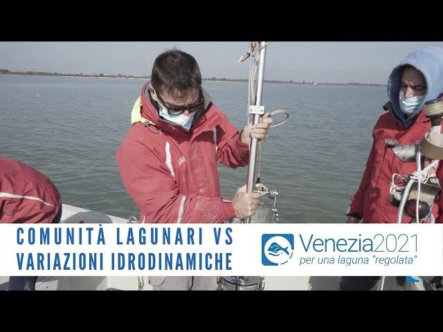 Microrganismi, comunità bentoniche e planctoniche VS variazioni dell'idrodinamismo lagunare