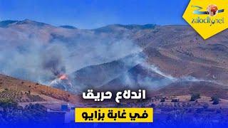 حريق مهول منذ البارحة بغابة جبال زايو