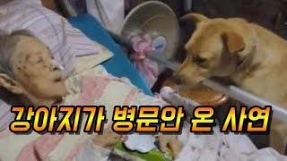 [감동]할머니 병문안 온 강아지의 눈물나는 사연 - 감동바다