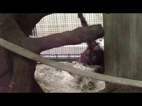 """""""Smithsonian National Zoo"""""""