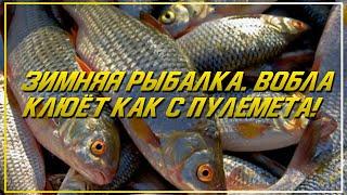 Зимняя рыбалка на воблу Ловля воблы на мормышку Клюёт как из пулемета Рыбалка в Казахстане Капчагай