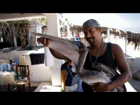 Holiday/Travel Guide 2012 - Puerto Vallarta - Mexico