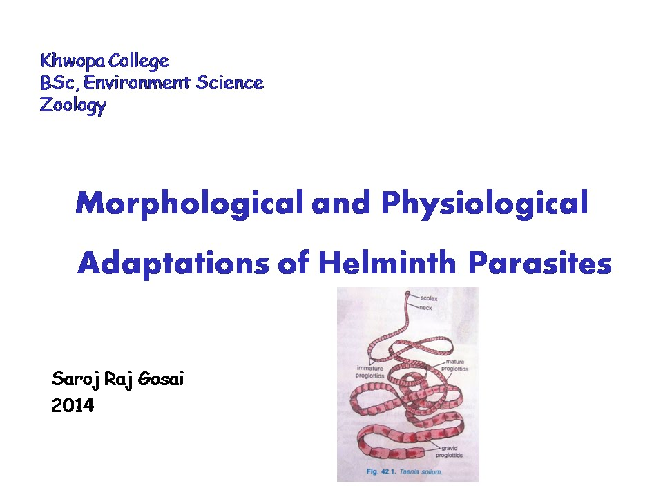 Immature and mature helminths