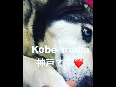 Kobe Hikayesi Bölüm 2 / Kimliği...