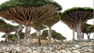Самые необычные деревья мира.  Красивые фото.