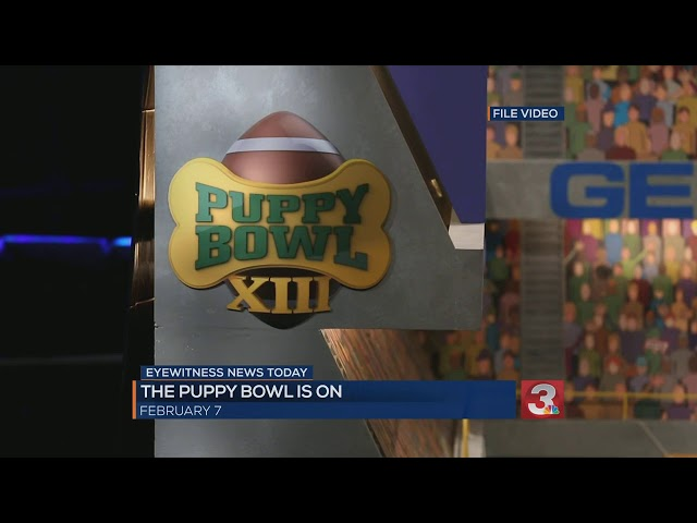 Animal Planet\'s pup-ular Puppy Bowl to go on as planned