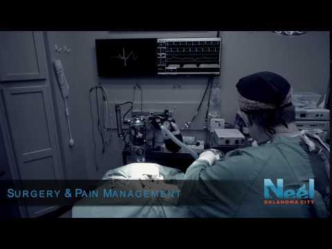 Surgery & Pain Management - Neel Veterinary Hospital Oklahoma City