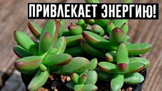 Это растение работает как магнит для позитивной энергии