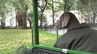 Mad. Sq. Art Throwback: William Wegman