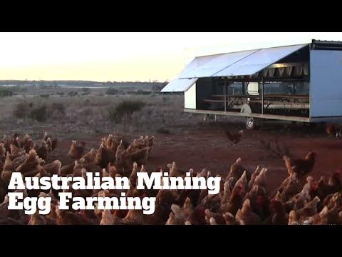 Australian Mining Egg Farming
