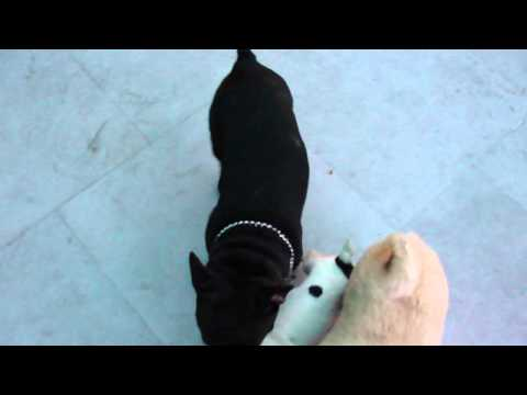pet boarding services delhi | dwarka | 9999133203