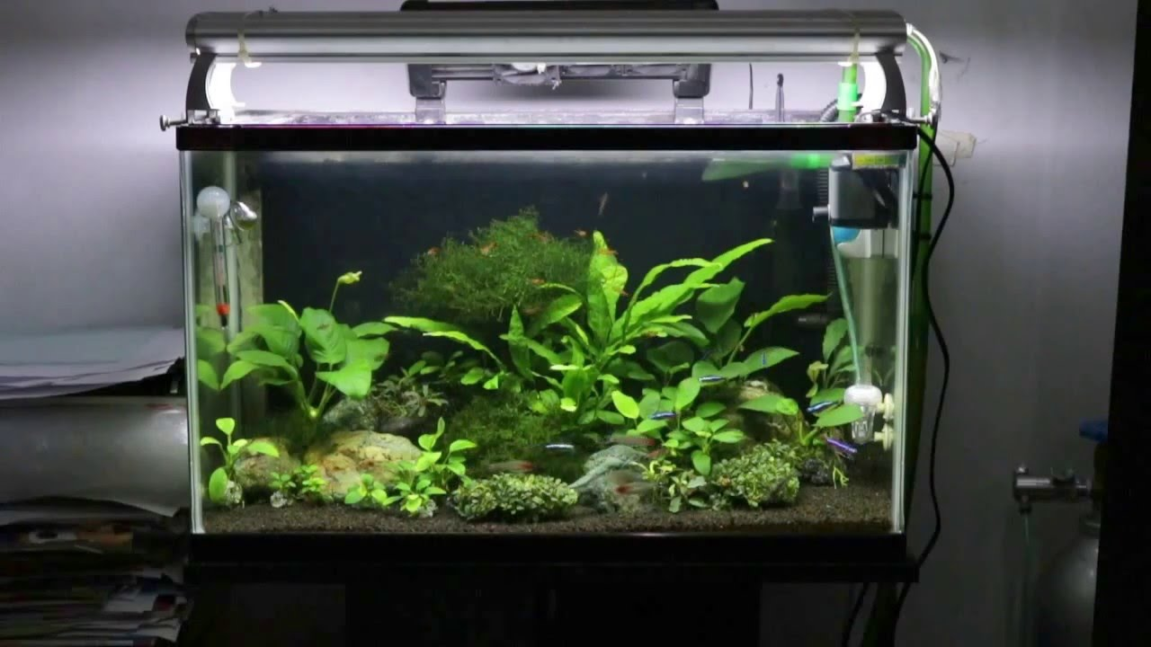 Planted Tank Aquarium Aquascape With Low Maintenance Plants