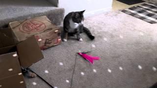 バブルの世界へ…猫ちゃん、ミラーボールのキラキラに大はしゃぎ!