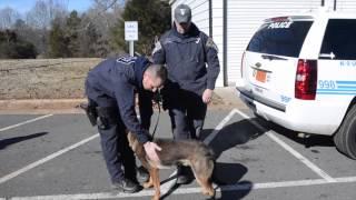 Charlotte-mecklenburg Police, K9 Unit, Dogs,leonidas And Atarah